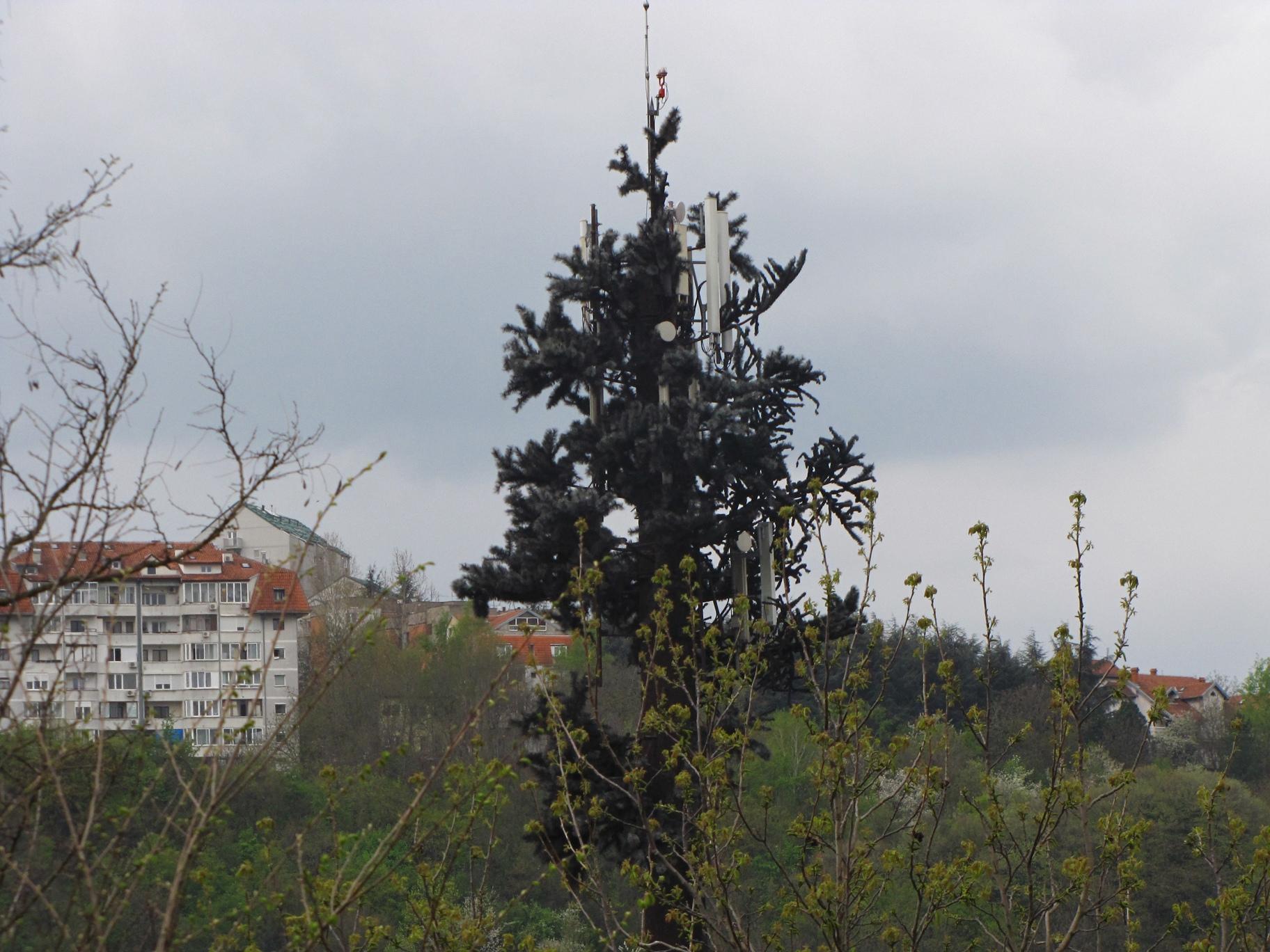 Vrh bazne stanice - drveta