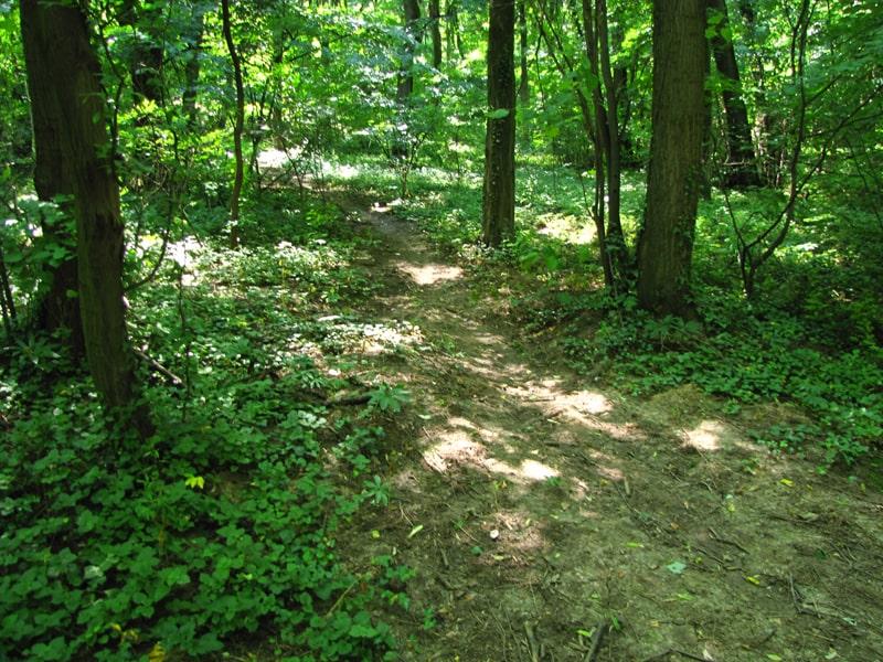 Stazica kroz šumu